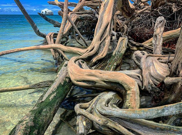 Drift Wood and The Cape Romano Dome Home